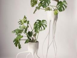 Monstera-plant pot